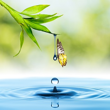 A waterdrop that is falling from leaf into stream, and which has a butterfly balanced on the drop.